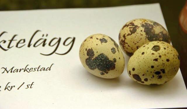 Ägg från Markestad