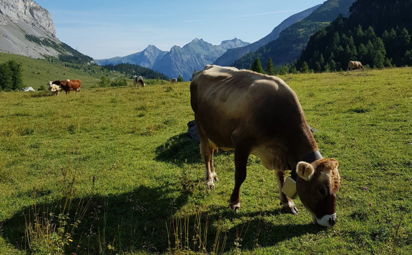 Inspiration i Alperna