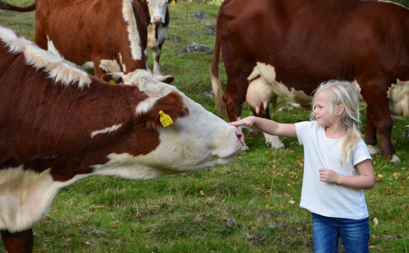 Lammkött och adventsmeny