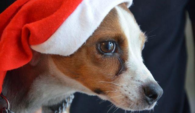 God Jul önskar vi på Norrby Ängar!